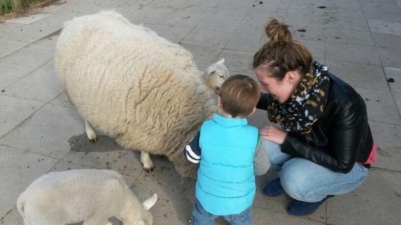 marieke-nylan-trotse-moeders-schaap