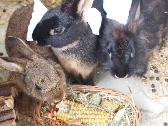snufje-pluisje-knabbeltje-konijn