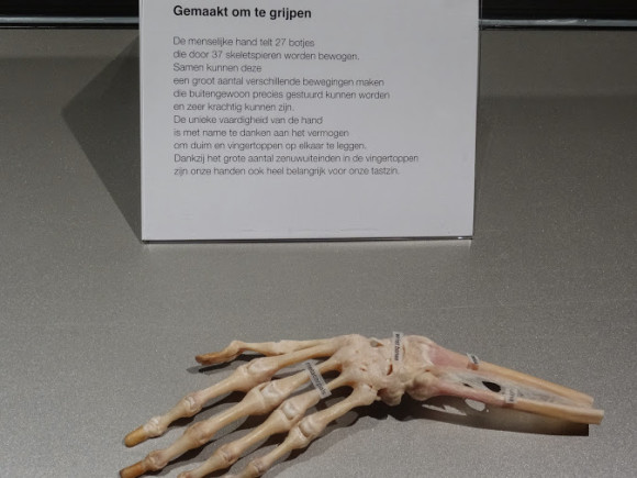 happiness-project-trotse-moeders-body-worlds-hand