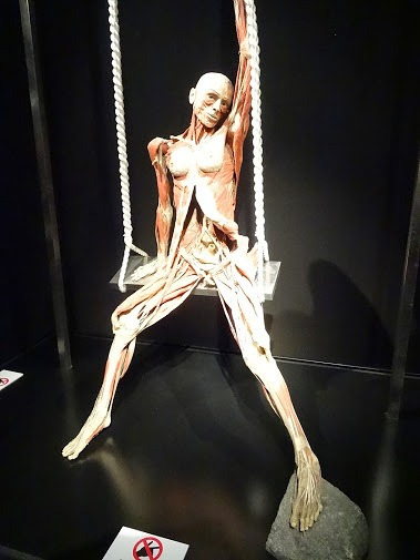 happiness-project-trotse-moeders-body-worlds-schommel
