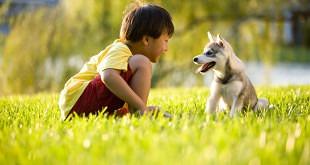 Jongetje-met-puppy