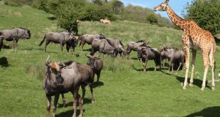 safari-engeland