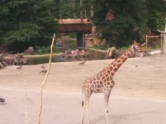 dierenpark-amersfoort-copyright-trotse-moeders-12
