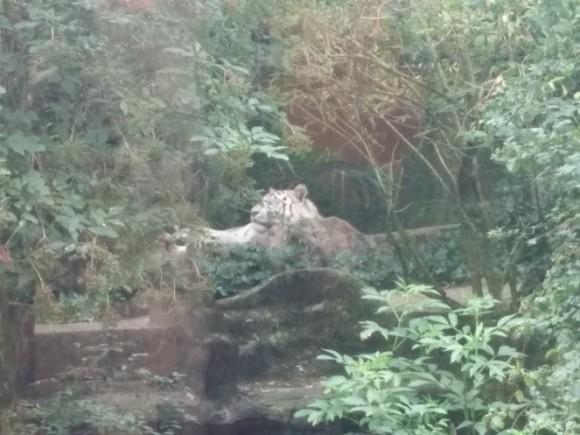 dierenpark-amersfoort-copyright-trotse-moeders-27