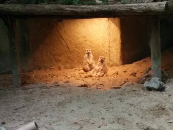 dierenpark-amersfoort-copyright-trotse-moeders-5
