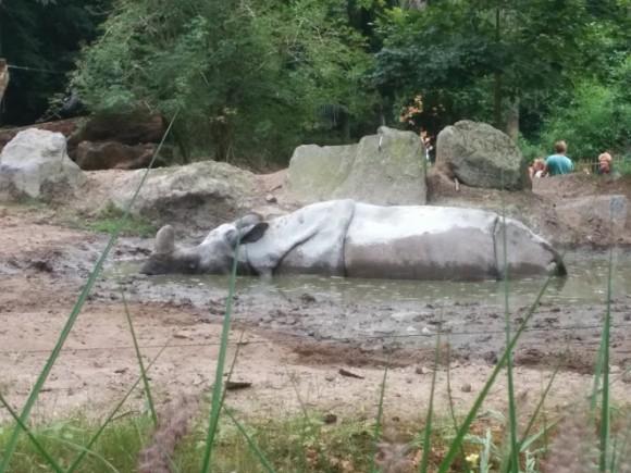 dierenpark-amersfoort-copyright-trotse-moeders-9