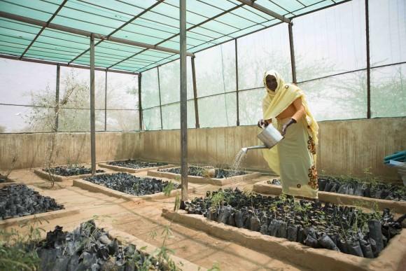 WFP stimuleert vrouwen planten te zaaien