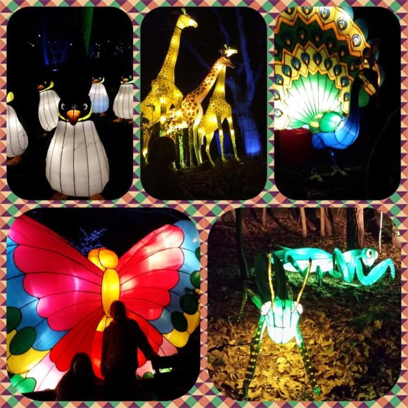 burgers-zoo-dierenpark-dierentuin-light-festival-verlicht-verslag-copyright-trotse-moeders-8