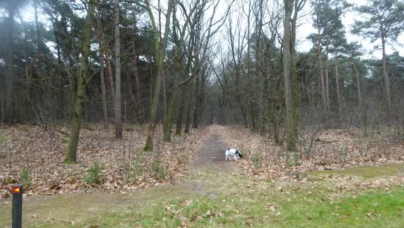 Limburg Bossen bij helenaveen