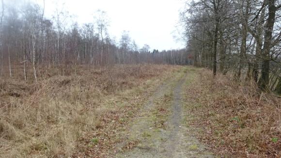 Limburg veen bij helenaveen