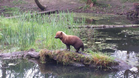gaia-zoo-bezoek-albertine-verslag-foto-copyright-trotse-moeders-11