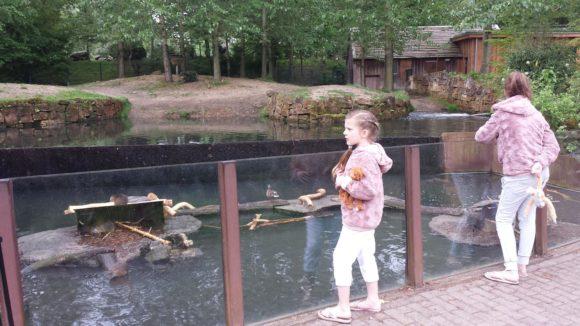 gaia-zoo-bezoek-albertine-verslag-foto-copyright-trotse-moeders-12