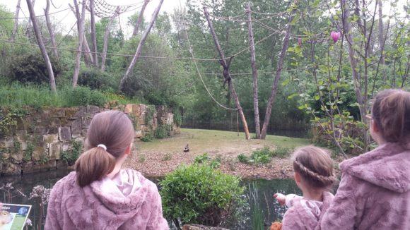 gaia-zoo-bezoek-albertine-verslag-foto-copyright-trotse-moeders-13
