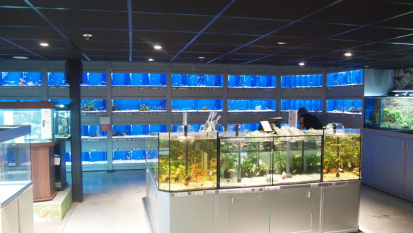 huisdierengeheimen presentatie NL stemmencast pets places vissen