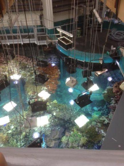 burgers-zoo-musical-onder-water-foto-copyright-trotse-moeders-marjolein-7