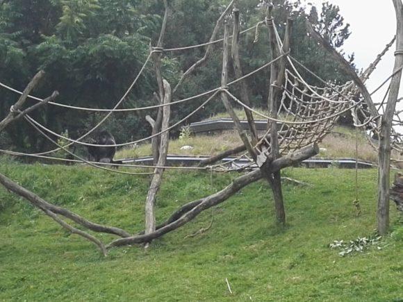 bezoek-gaia-zoo-limburg-dierentuin-foto-copyright-trotse-moeders-12