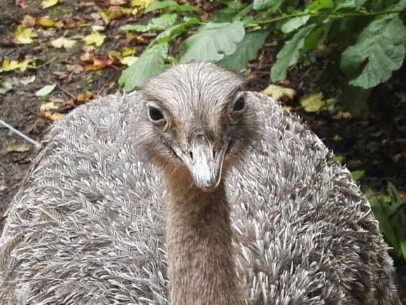 bezoek-gaia-zoo-limburg-dierentuin-foto-copyright-trotse-moeders-18