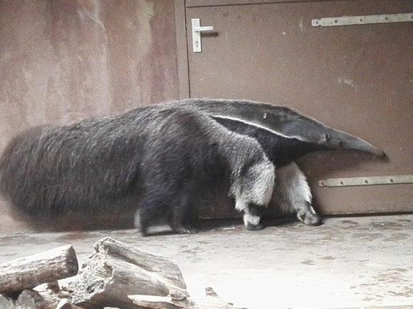 bezoek-gaia-zoo-limburg-dierentuin-foto-copyright-trotse-moeders-19