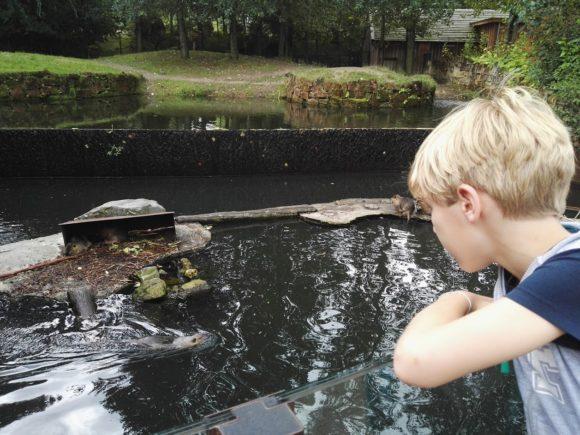 bezoek-gaia-zoo-limburg-dierentuin-foto-copyright-trotse-moeders-22