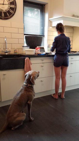 zelf-wentelteefjes-bakken-blog-recept-copyright-trotse-moeders-albertine-6