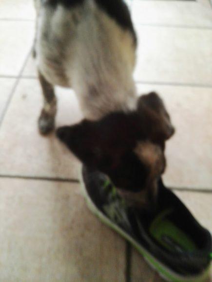 skechers-schoenen-puber-artikel-copyright-trotse-moeders-snoopy