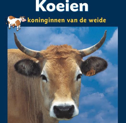 Koeien uitgelicht beeld