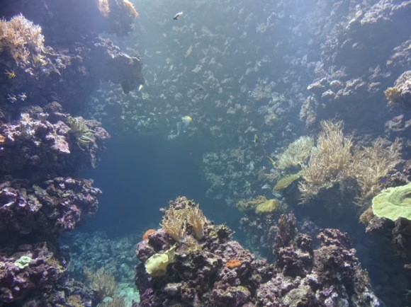 Nergens-meer-veilig-ocean2