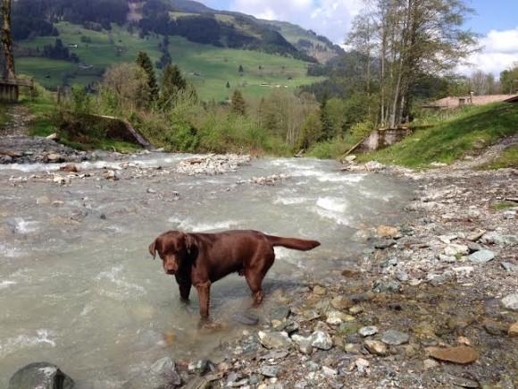 charlotte-hond