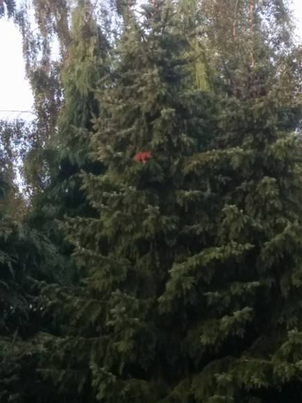 eekhoorn-in-tuin