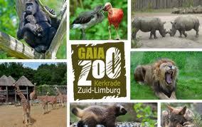 gaia-z00