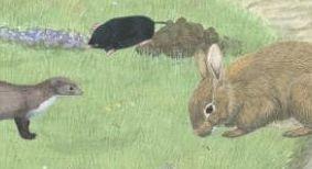 konijn in de natuur