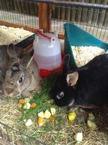 konijnen-jarig