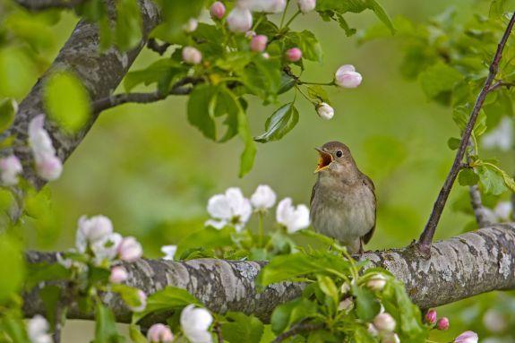 Adopteer een vogel voor moederdag