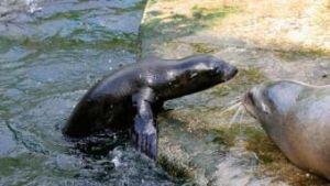 baby zeeleeuw